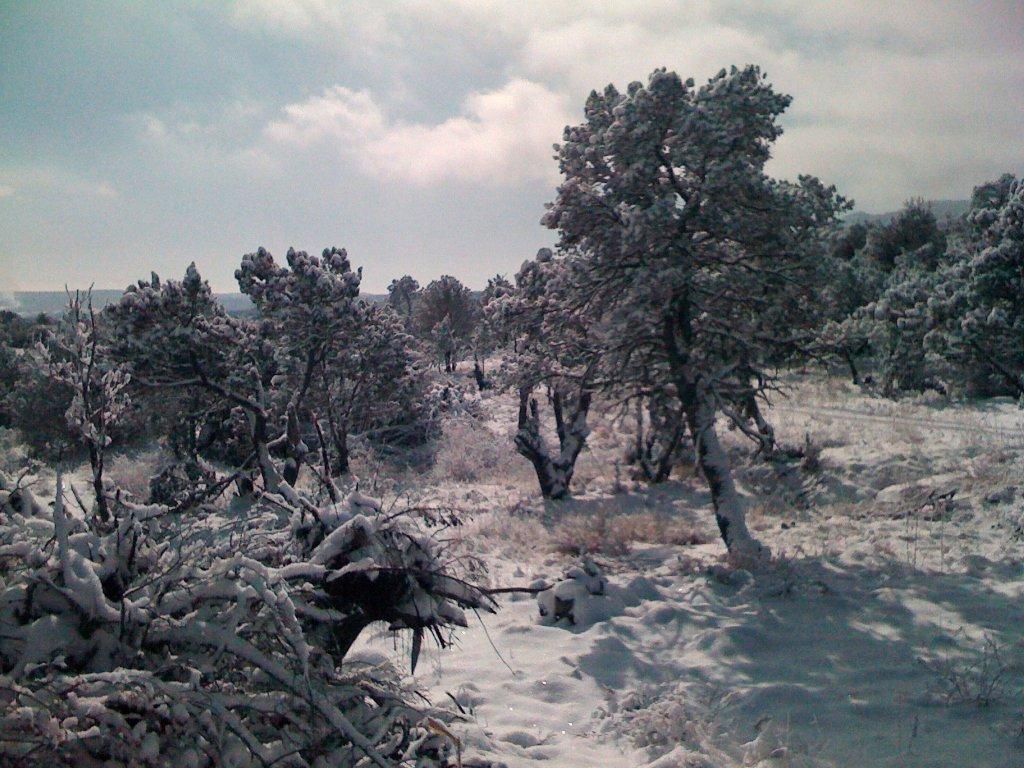 Arabela Snow